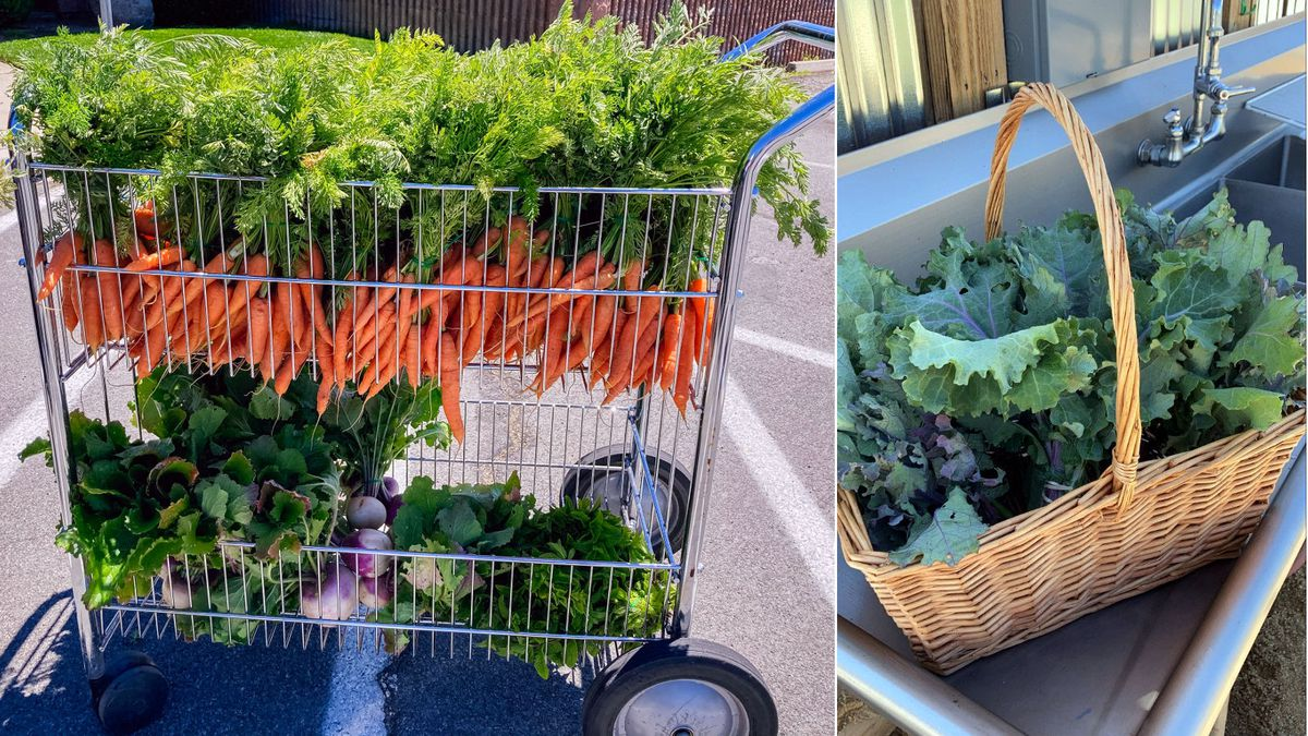 Urban Roots is selling Sustainable Harvest Bags.