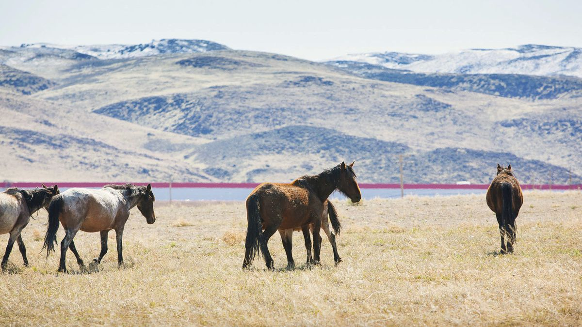 Tesla released this photograph of the Gigafactory exterior and wild horses.