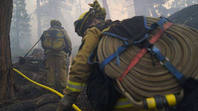 Two firefighters from Cosumnes Fire Department carry water hoses while holding a fire line to...