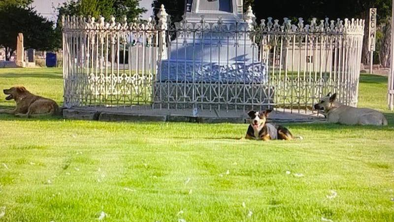 Feral dogs at Lone Mountain Cemetery, Carson City