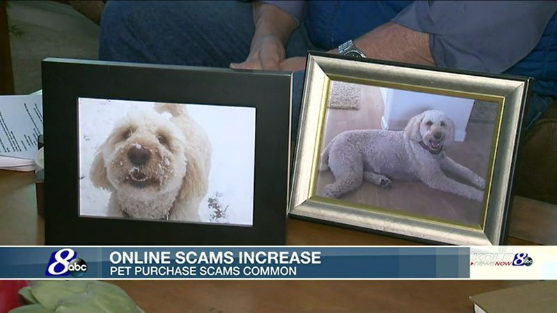 Online scams are on the rise, with pet purchase scams among the most common.