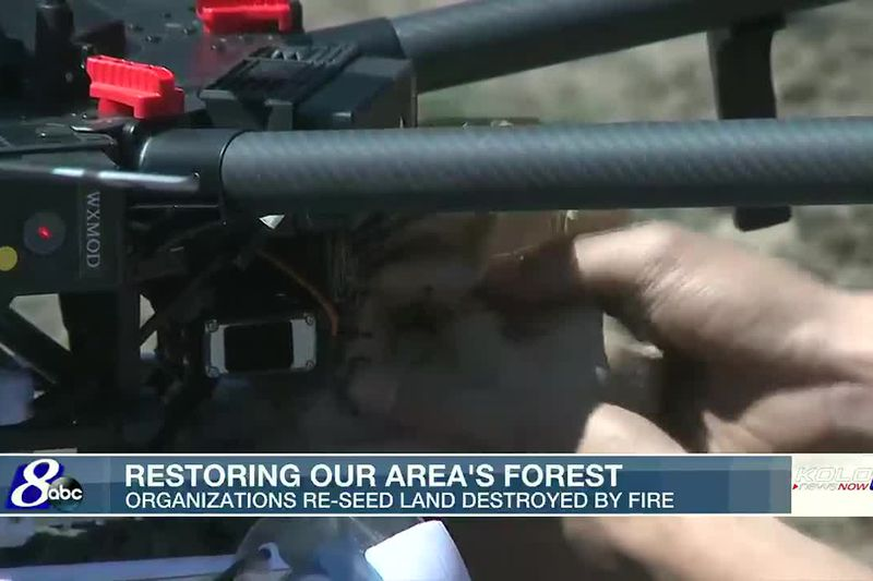 Restoring area forests one flight at a time