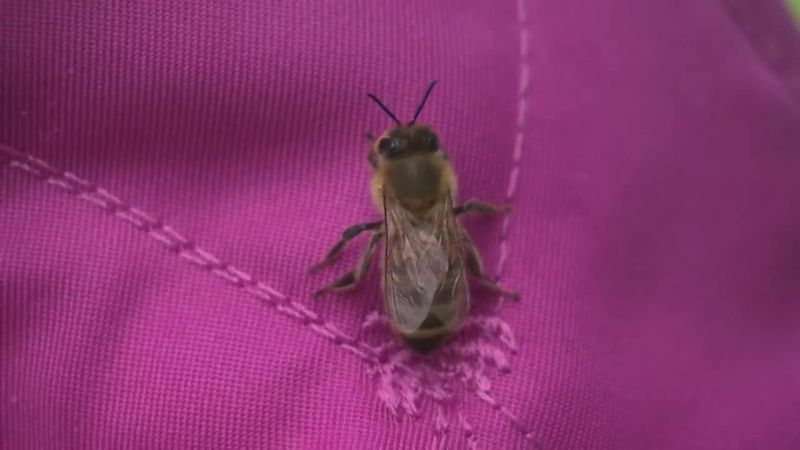A swarm of honeybees on a Nassau County-owned property is growing by the day.