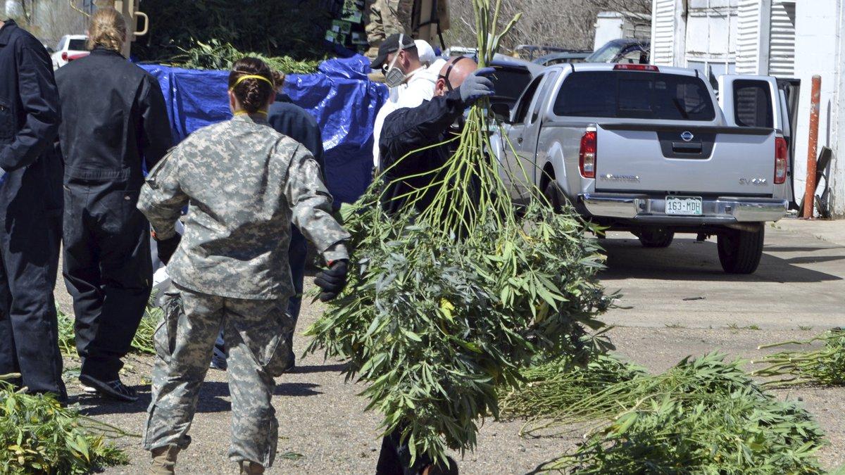 In this April 14, 2016, file photo, investigators load marijuana plants onto a Colorado...