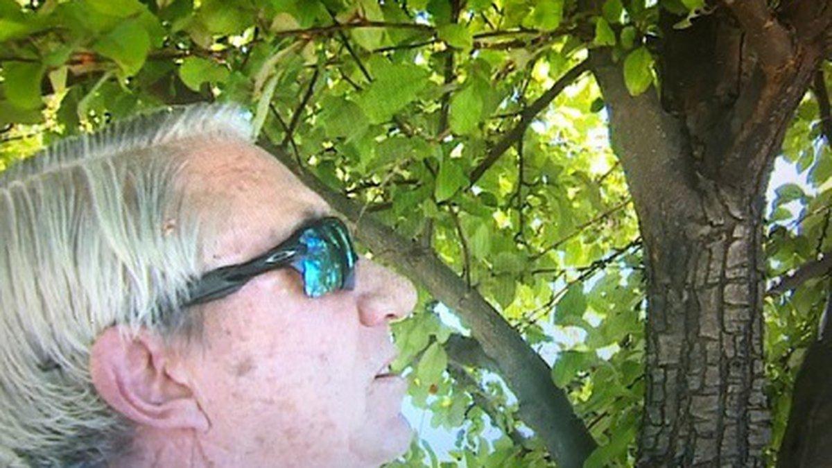 Consulting arborist Dale Carlon