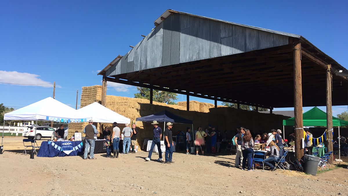 Nevada Ag Field Day at the University Farms in east Reno. Photo by Chris Buckley/KOLO.