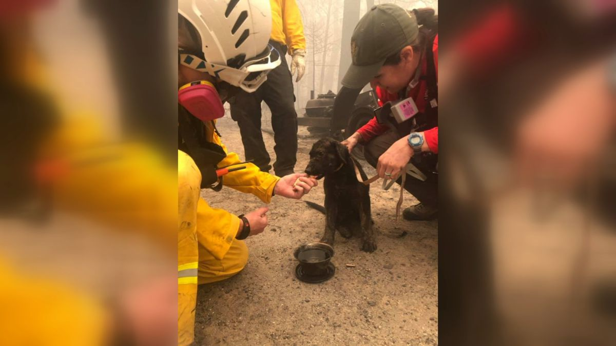 Butte County Sheriff Deputies and Search and Rescue helped save this puppy