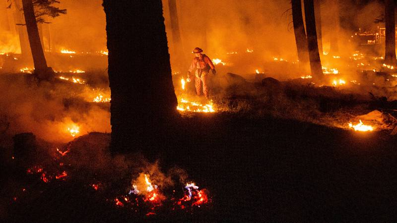 A firefighter uses a drip torch to ignite vegetation while trying to stop the Dixie Fire from...