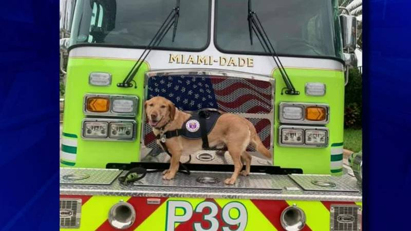 Teddy provided hope for first responders at Champlain Towers South in Surfside, Florida.