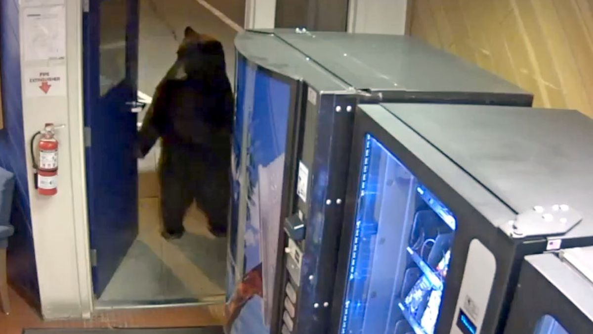 This is a screenshot of a video released by the California Highway Patrol that shows a bear walking into the the Donner Pass Commercial Vehicle Enforcement Facility.