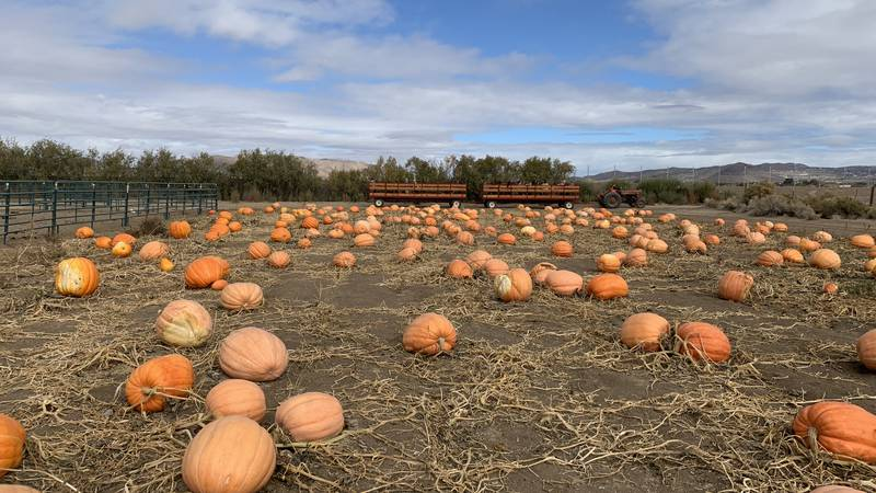 The Department of Wildlife is warning against giving pumpkins to wildlife.