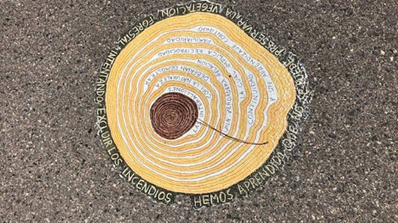 Large tree ring represents one of 38 pieces of art at Taylor Creek Park