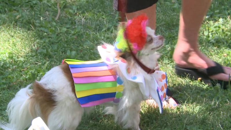 Dog participates in best costume competition at Art Paws.